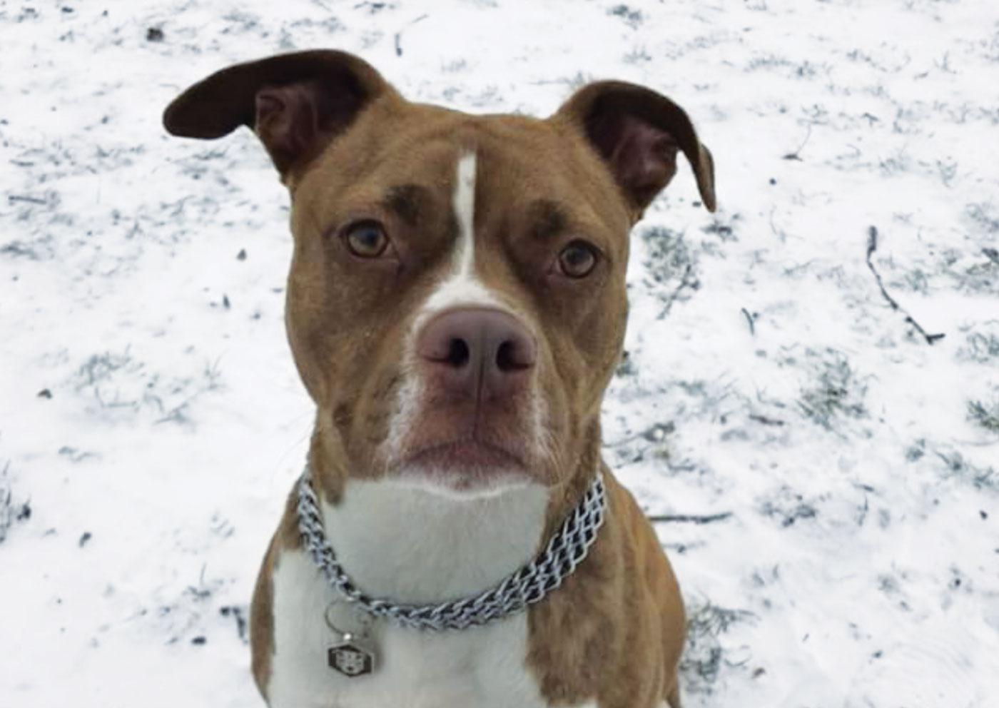 Winter tips: le 7 regole per proteggere dal gelo il proprio cane