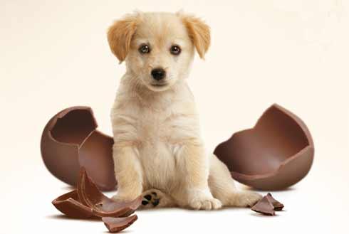scopriamo insieme perché il cioccolato fa male ai cani e quali sono i sintomi