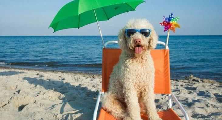 Spiagge per cani 2018-migliori-regioni-italia