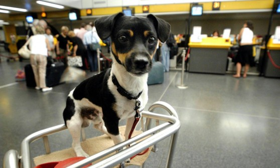 Cani in aeroporto