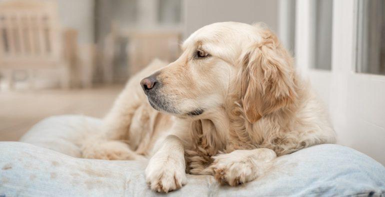 Artrosi e cani