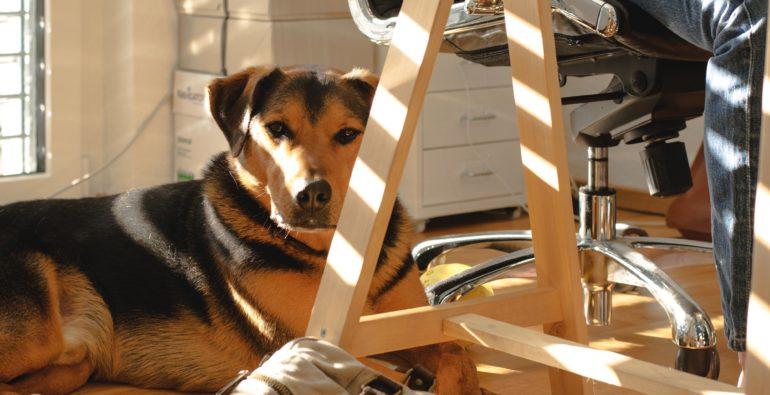 Doge Store - Cani in ufficio