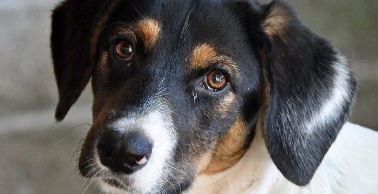 Doge - Cuccioli di cane cercano casa