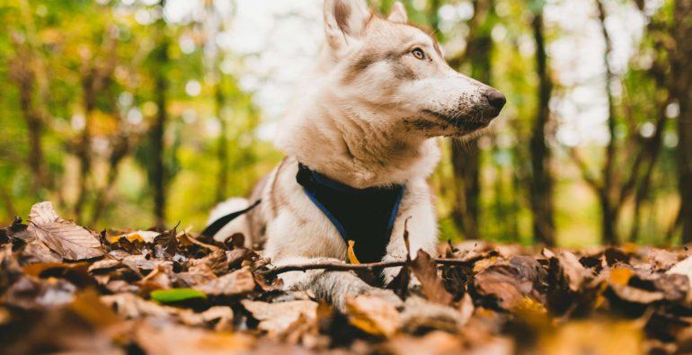 Dogestore - Cani e malaria