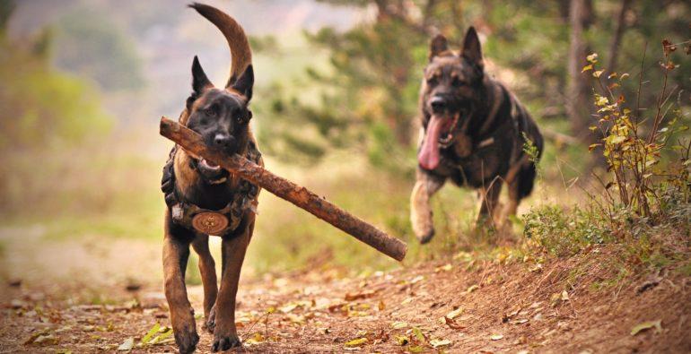 Doge Store - Le interazioni tra cani