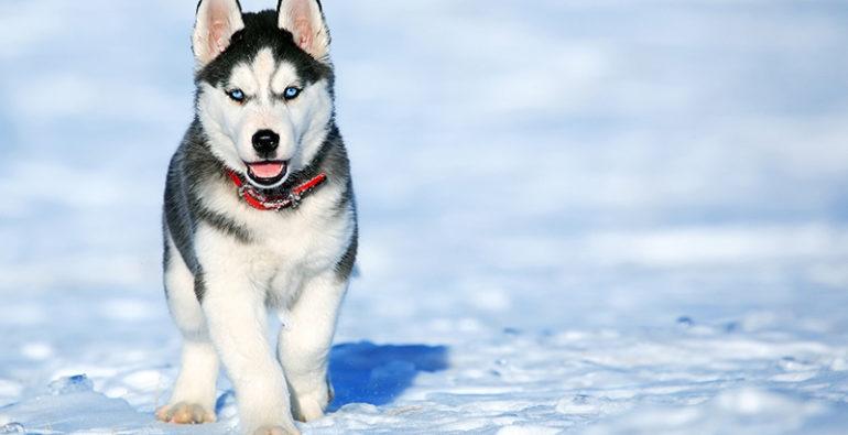 Doge Store - Cani felici