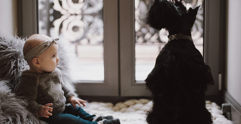 Doge Store - Cani e bambini