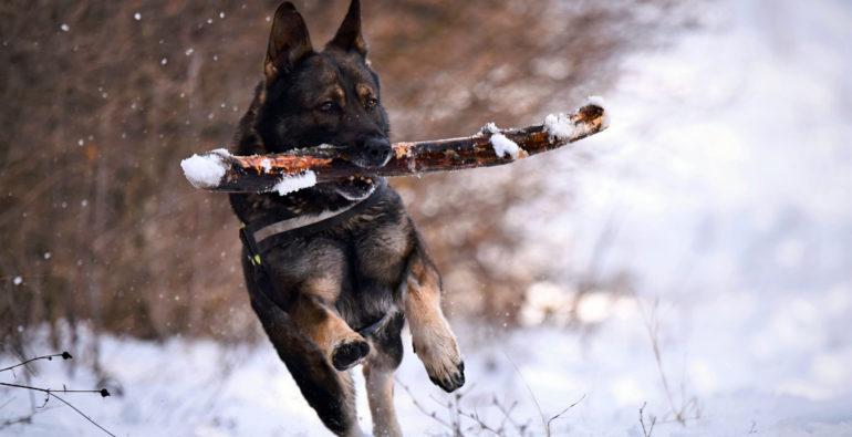 Doge - Comunicare col cane