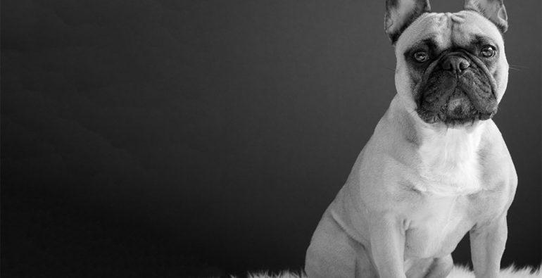 Doge Store - I cani sono persone?