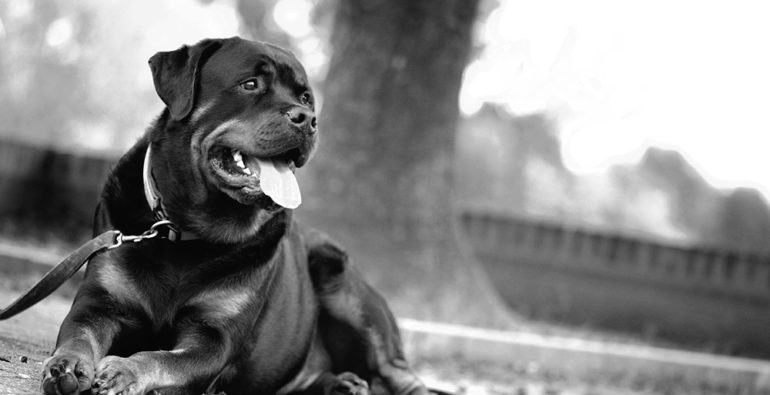 Doge Store - 5 buoni consigli per una passeggiata col cane perfetta