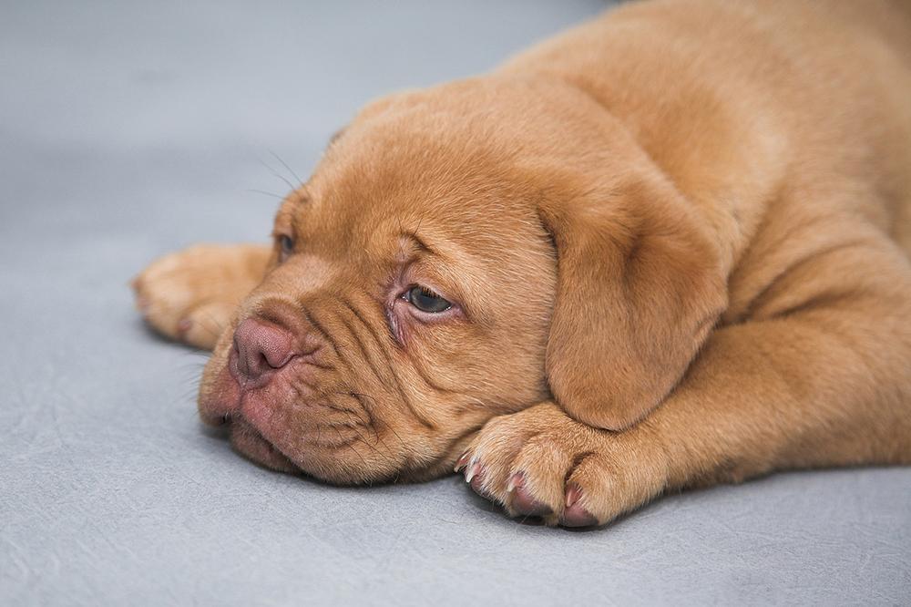 Doge store - Cani e processionarie: sintomi, rimedi e prevenzione per il periodo primaverile