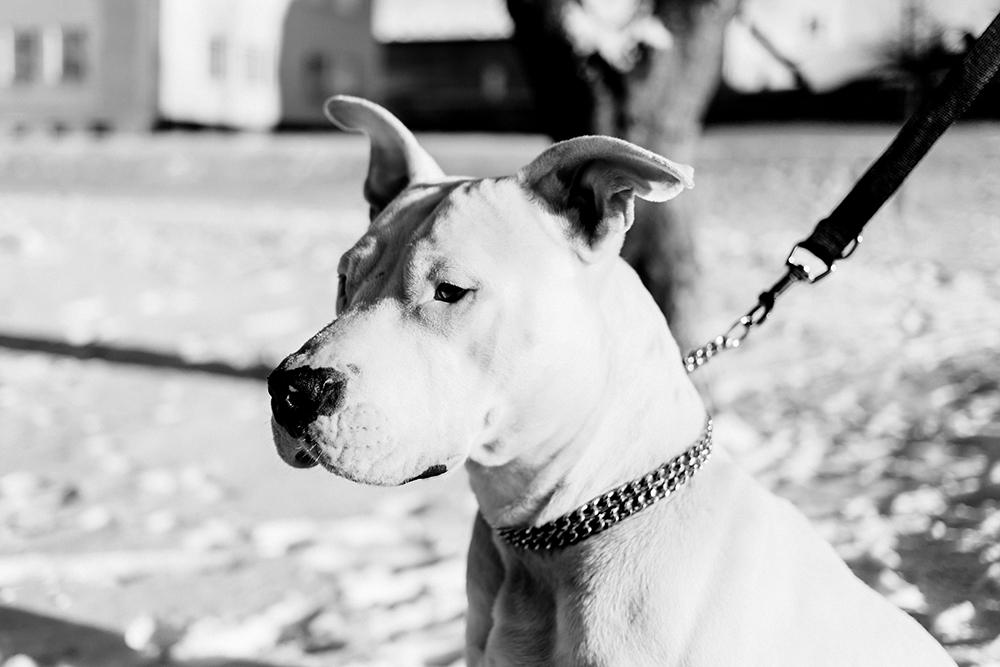 Doge Store - Il guinzaglio migliore per una buona passeggiata col cane